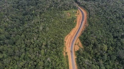 Pemerintah Akan Menjaga Kelestarian Hutan di Ibu Kota Negara Baru