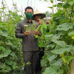 Anggota DPRD WK Dapil 2,Sambangi Para Petani