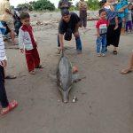 Seekor Lumba-lumba Di Ketemukan Mati Terdampar