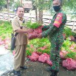 Koramil 421-10 KTB. Bagikan 5000 Bibit kelor ke 15 Desa di kecamatan Merbau Mataram.