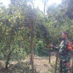 Babinsa mengharapkan warga agar dapat memanfaatkan lahan kosong/lahan tidur untuk di tanami buah- buahan dan sayur mayur.