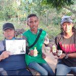 Kayu Ular Obat Herbal Asli Papua
