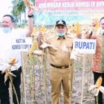 Lakukan Panen Raya dan Dialog Dengan Komisi IV DPR RI, Petani Jagung Harap Harga Jagung Dapat Disubsidi