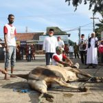 Rycko Menoza Saksikan Pemotongan Hewan Qurban