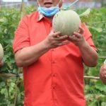 Nanang-Sudin Panen Melon Perdana di Kebun Edukasi Rumah Dinas Bupati
