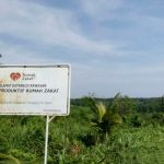 Rumah Zakat Optimalkan 7 Hektar Lahan Wakaf Untuk Kebun Kelapa Aromatik