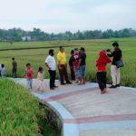 Fauzi Meninjau Areal Sawah Di Padang Surya Fajar Agung Pringsewu