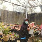 Bisnis Bibit Tanaman Via Online, UKM Ini Raup Untung di Tengah Pandemi