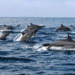 Kemenko Marves: Perikanan, Bencana Laut, Kearifan Lokal Pengelolaan Laut, Usungan Indonesia pada 3rd UN WOA