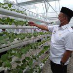 Wabup Pringsewu Tinjau Oemah Sewu & Green House Hidroponik Terbesar di Lampung