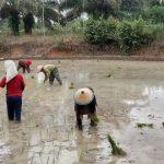 Petani Keluhkan, Selain Harga Naik Pupuknya Juga Susah.