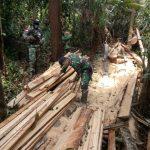 Satgas Yonif 642/Kapuas Amankan Kayu Hasil Illegal Logging di Wilayah Perbatasan