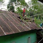 Angin Kencang, Satu Rumah Warga  Rusak Tertimpa Pohon Tumbang