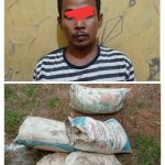 Curi Getah Karet Milik PTPN, Warga Tanjung Bintang Di Tangkap Polisi