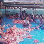 Dimasa Pandemi Covid-19 Jumlah Hewan Qurban di Masjid Nurul Ikhsan Tanjung Aman Menurun
